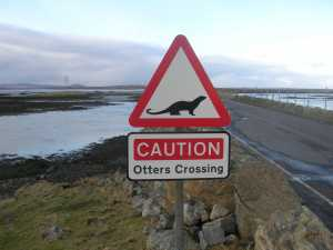 Otter Road Crossing, Western Isles Tour